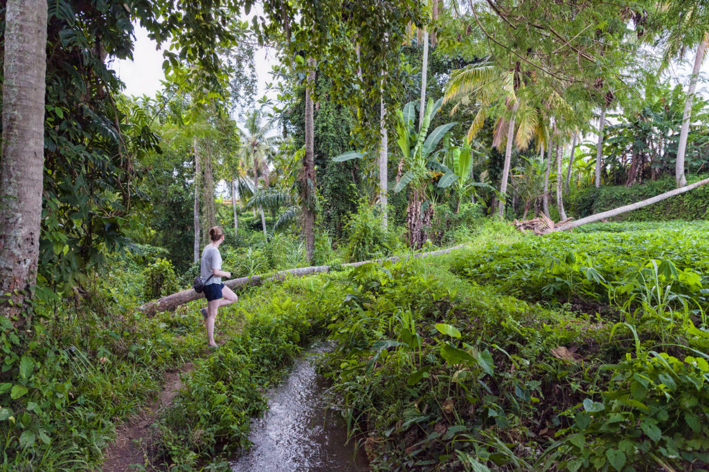 Getting lost in Bali's Jungle